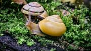 Makro, Schnecken, Pilze