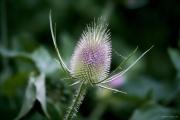 Kräppelweiher, Makro, Bobenheim-Roxheim, Macro, Stacking, Blüte, Blossom, Drops, Tropfen, Regen, Rain, Water, Wasser