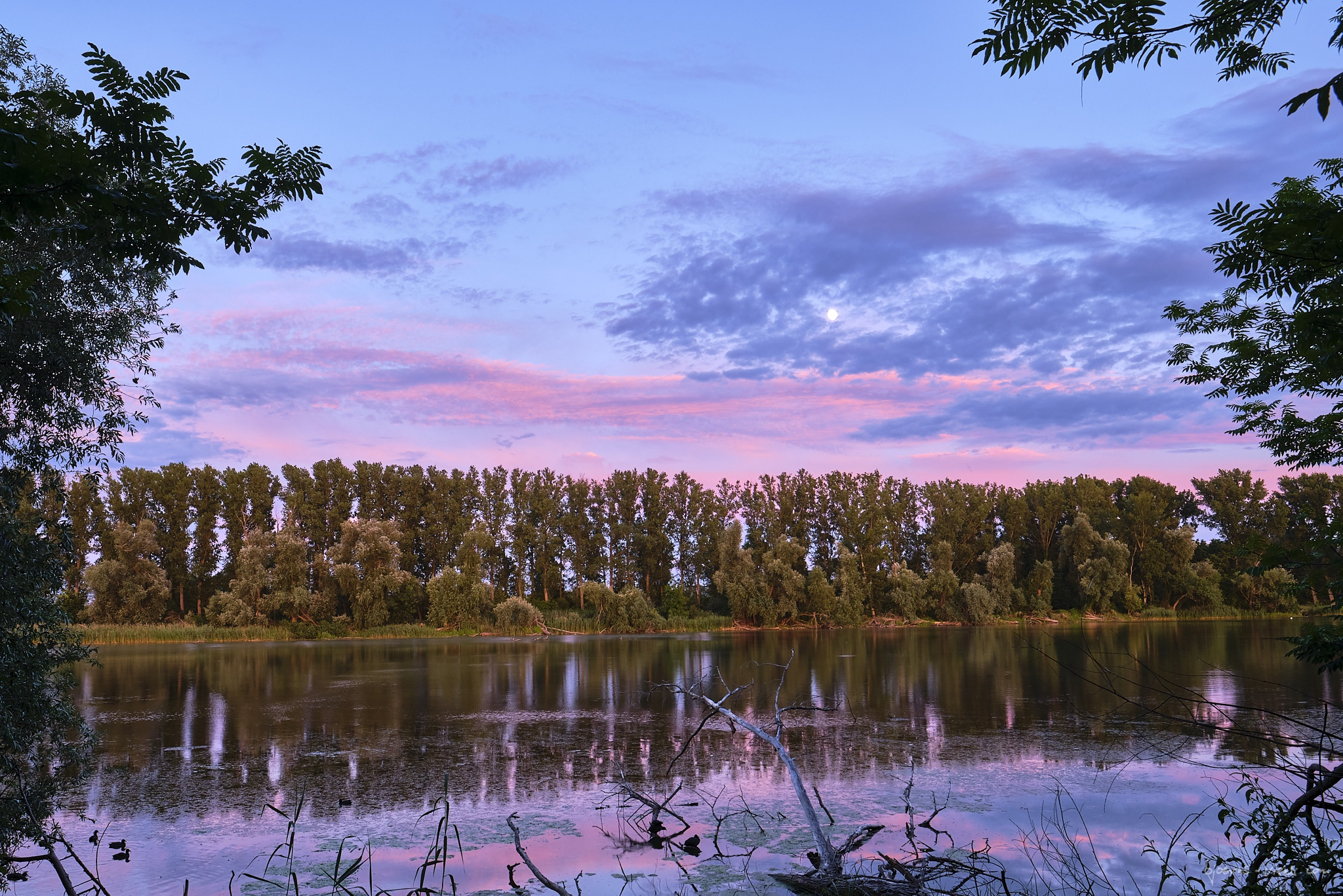 Bobenheim-Roxheim, Spaziergang, Sonnenuntergang, Makro, Macro, Himmel, Sky, Farben,