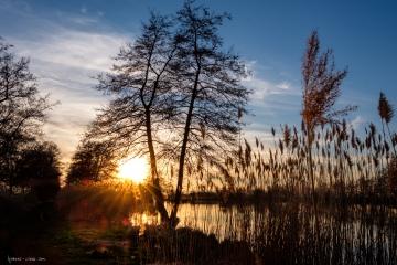 Die letzten Sonnenstrahlen am Niederwiesenweiher