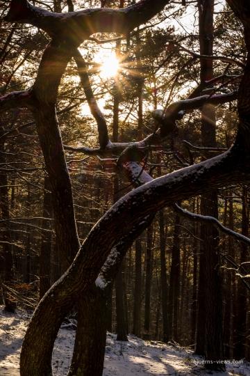 Toller Baum mit Sonnensternchen